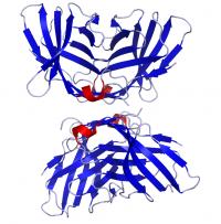 CTLA-4 (recombinant human protein)